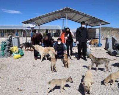 Engelsiz Spor Kulübü antrenörleri, sokak hayvanlarını unutmadı