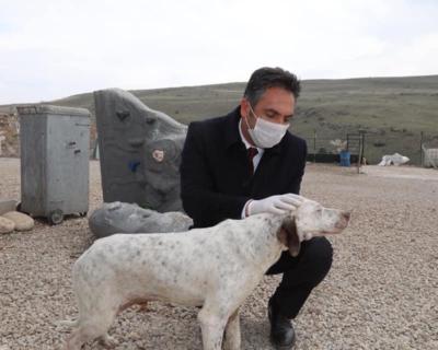 Çubuk Belediyesi sokak hayvanlarını unutmadı