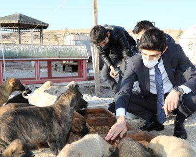 Sağlık Çalışanları Sokak Hayvanlarını Besledi